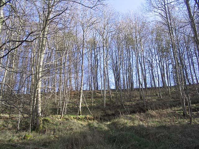 Woodland at Camptown