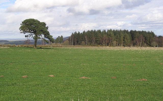 Grazing field