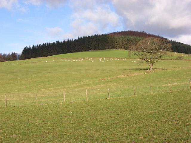 Pastures, Leithenhall
