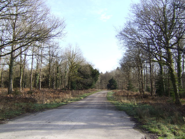 Road into The Holt
