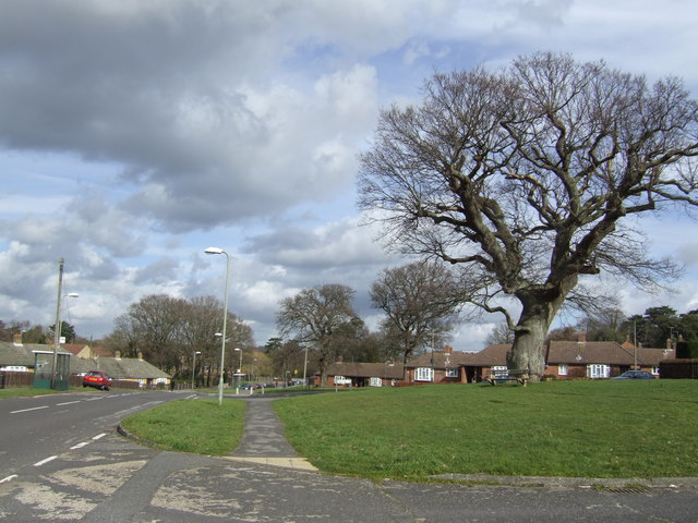 Oaks and Bungalows