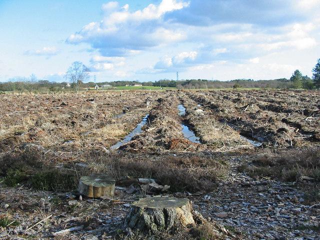 West Moors Plantation,West Moors, Dorset