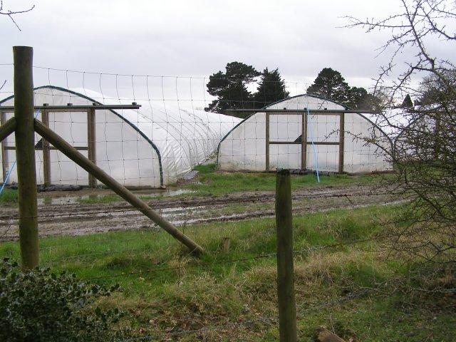 Polytunnels alongside Cripple Gate Lane, East Boldre