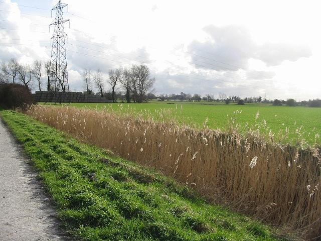 Road, verge, ditch, field
