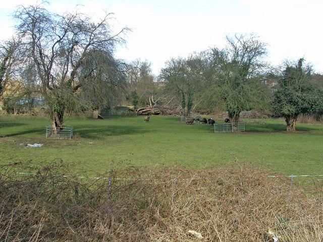 Farmland at Frog's Bottom near Slades Hill, Enfield
