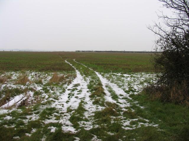 Tracks in a field