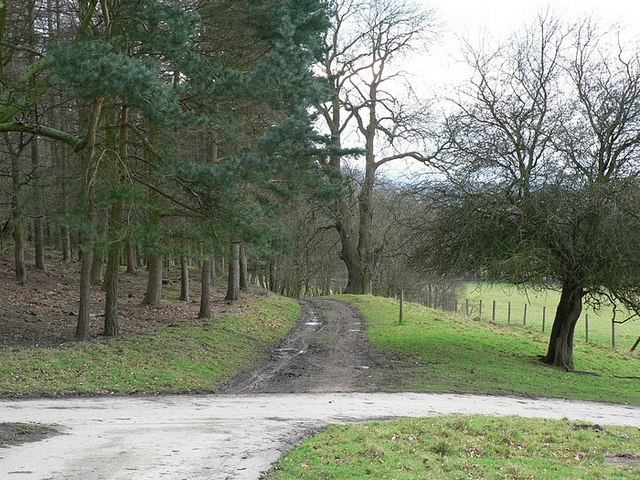 Track to Lady Bridge, by Harewood Park