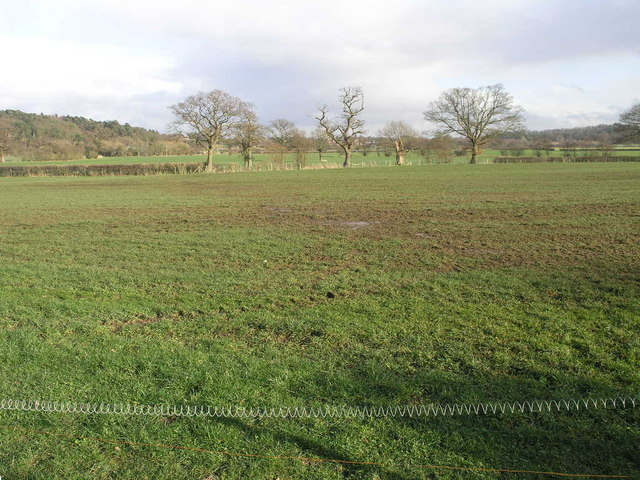Field Trees and Coiled Fence