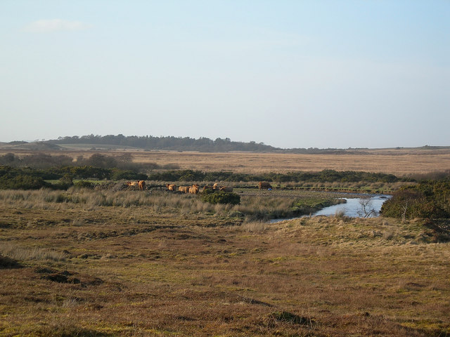Cattle by the Kilennan River