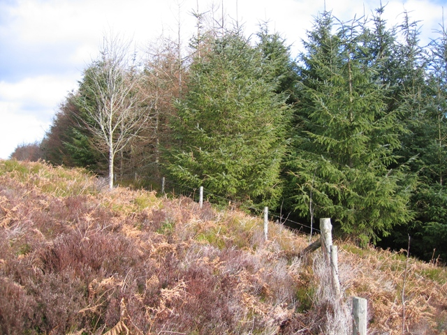 Moorland and Forest Boundary