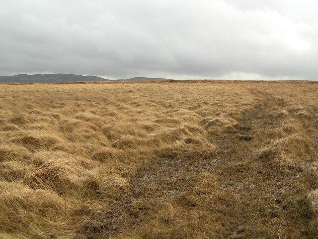 Wet Moor