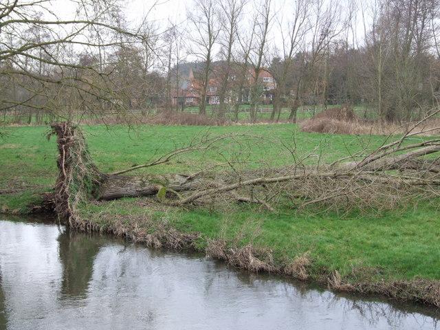 Fallen Tree, Attlebridge