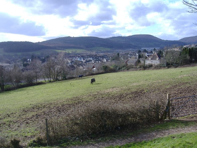 Grazing, above Rogerstone