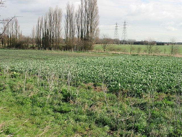 Farmland near Plucks Gutter