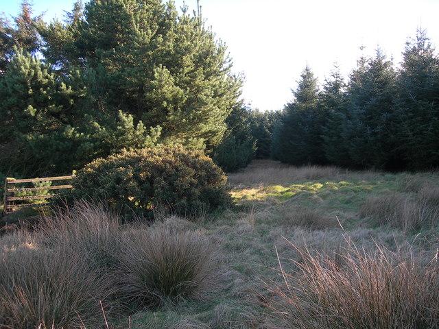 Forestry on Penmanshiel Moor