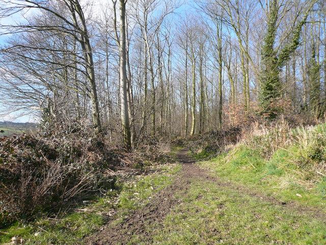 Geer Lane - Bridleway view into Ryalls Wood
