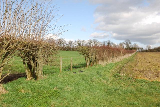 Field boundary on Manor Farm