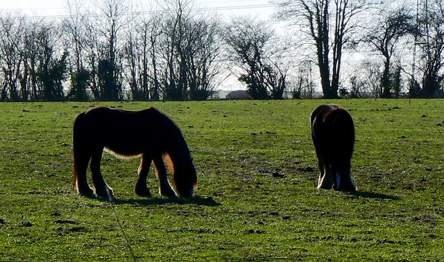Young horses in a field near Marr Green, Wiltshire