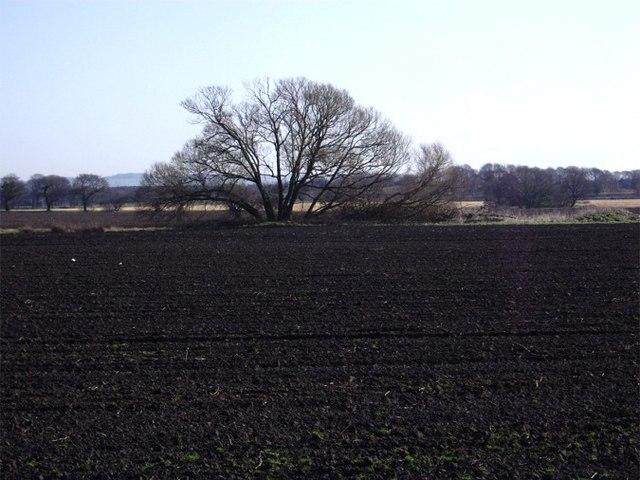 Farmland at Simonswood