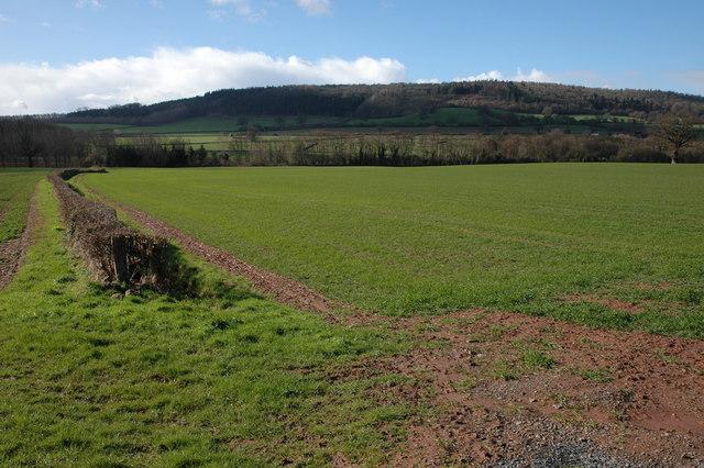 Farmland at Mansel Lacy