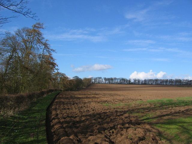 Pockthorpe Hall Farmland