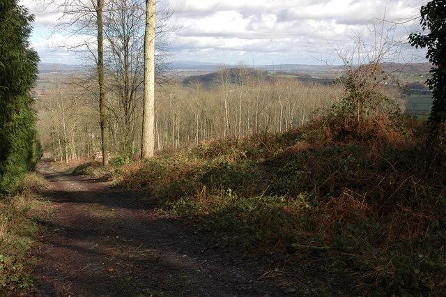 Track through Garnstone Wood
