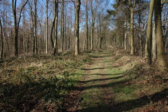 Footpath through Garnstone Wood