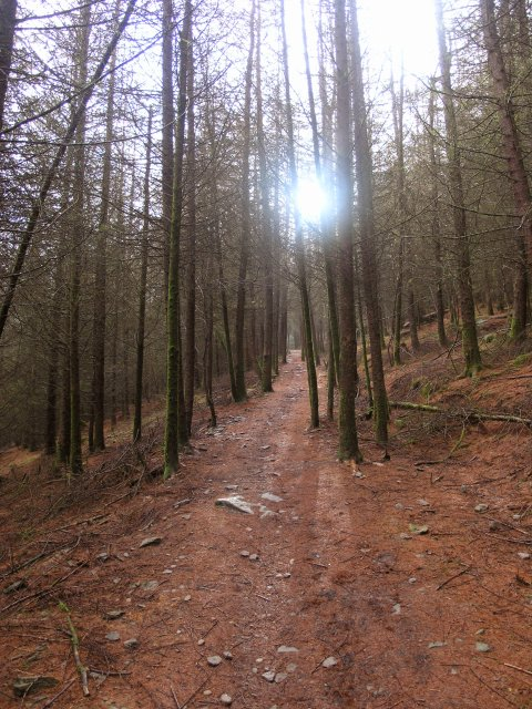 Forestry footpath