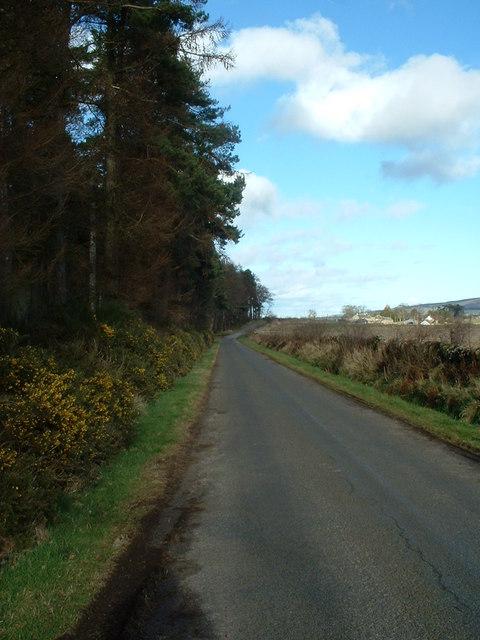 Rural Lane in spring