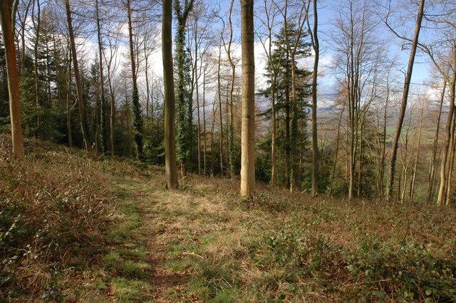 Footpath through the woodland on Burton Hill