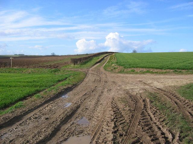 Track Crossing Bridleway