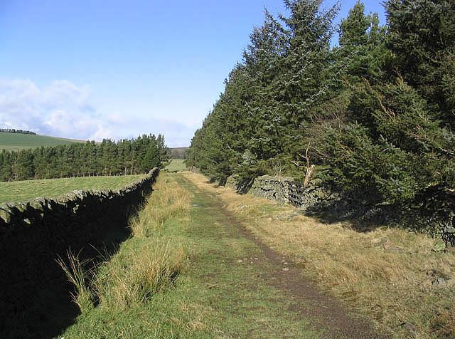 Farm track by a plantation