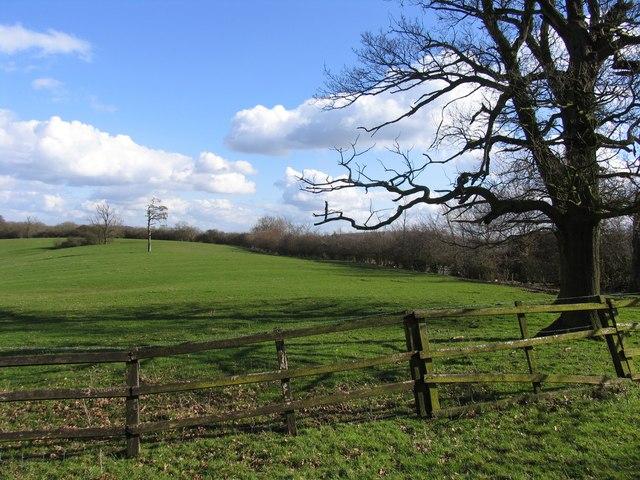 View towards Launde Park Wood
