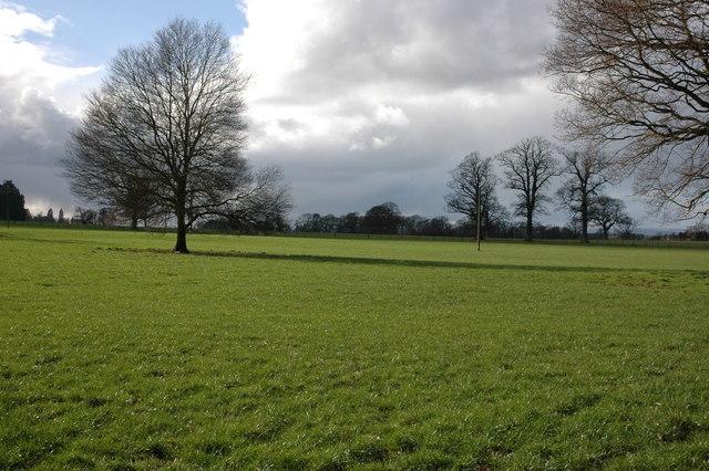 Trees in Garnstone Park, near Weobley