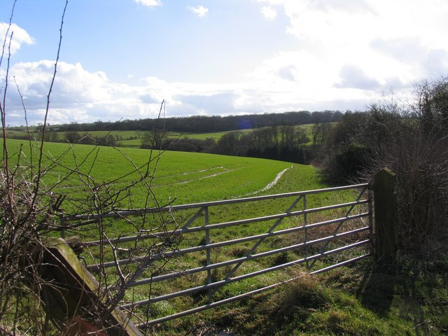 Fields with Launde Park Wood in the distance