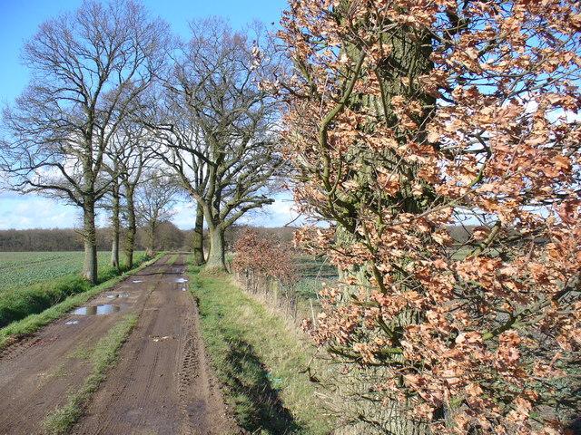 Track North of Osborne's Farm