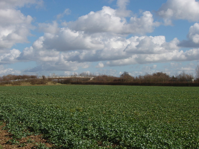 Brassica field and footbridge over A34