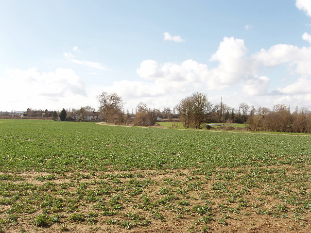 Brassica field, view to Gosford