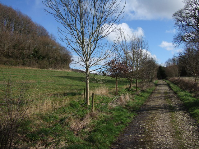Bridleway and Orchard Wood