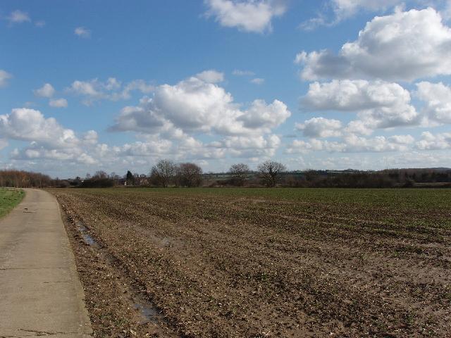 Brassica field, view to Northfield Farm