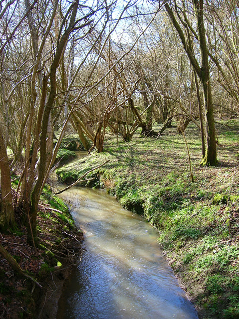 Stream, Westenden Wood