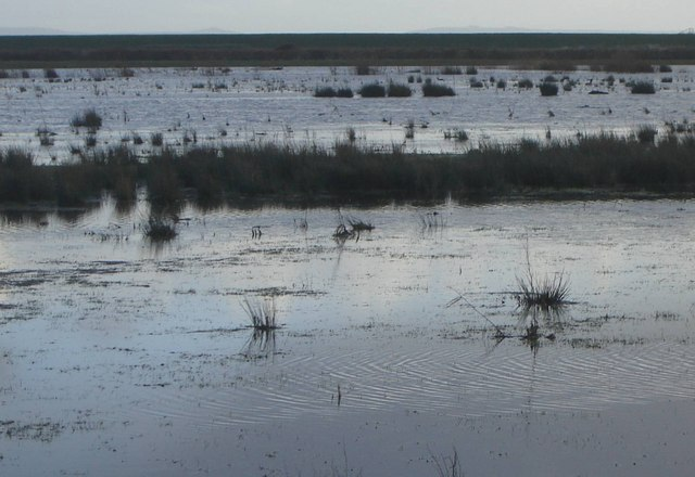 Wetlands, Goldcliff, Monmouthshire