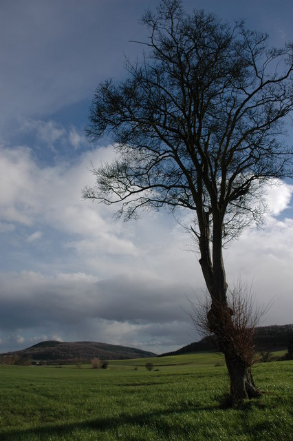 Tree and Credenhill