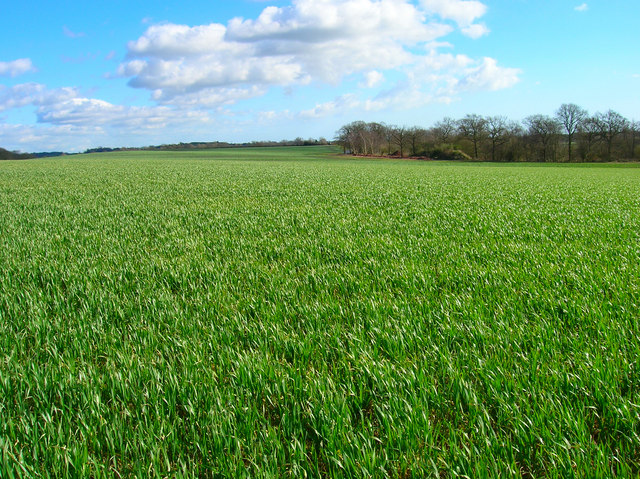 Farmland North of Boggy Wood