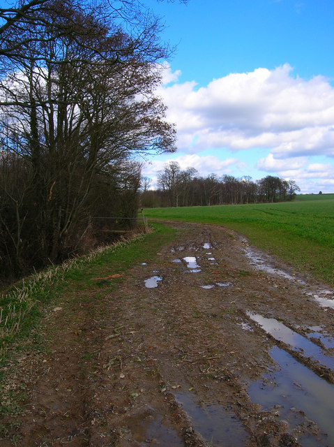 Footpath Junction, South of Boggy Wood