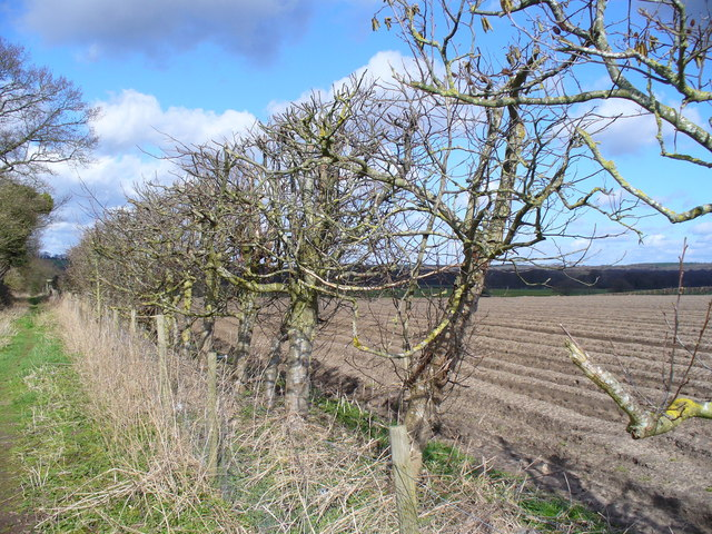 Hedgerow, East of Kingsley