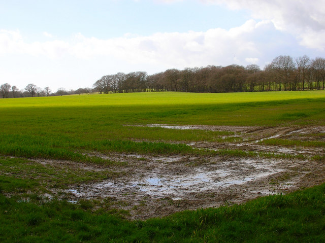 Field near Hackhurst Stud