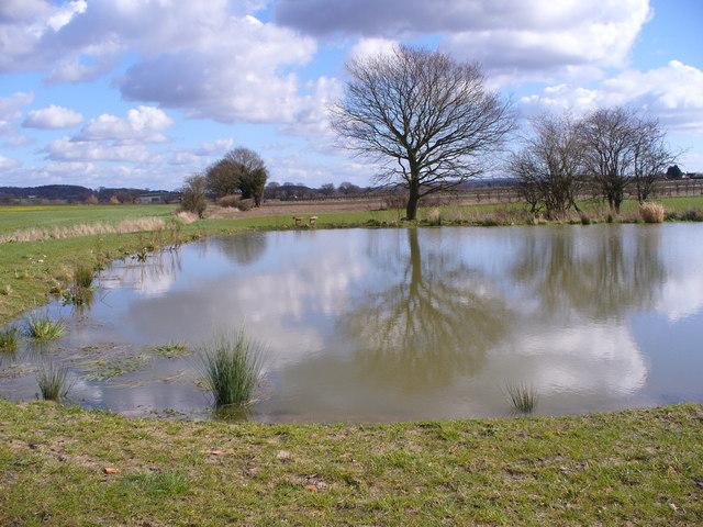 Pond North-east of Kingsley