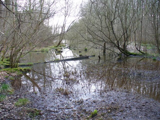 Pond, Straits Inclosure