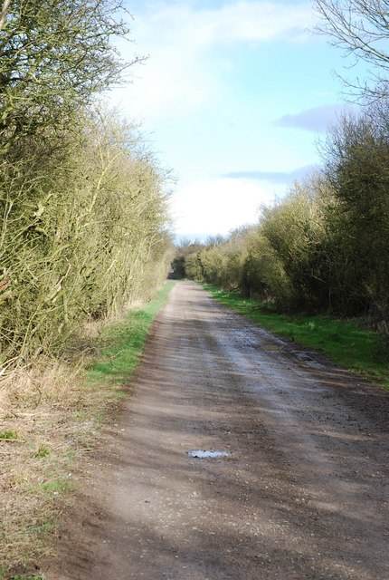 Old Shaftsbury Drove - across Compton Down